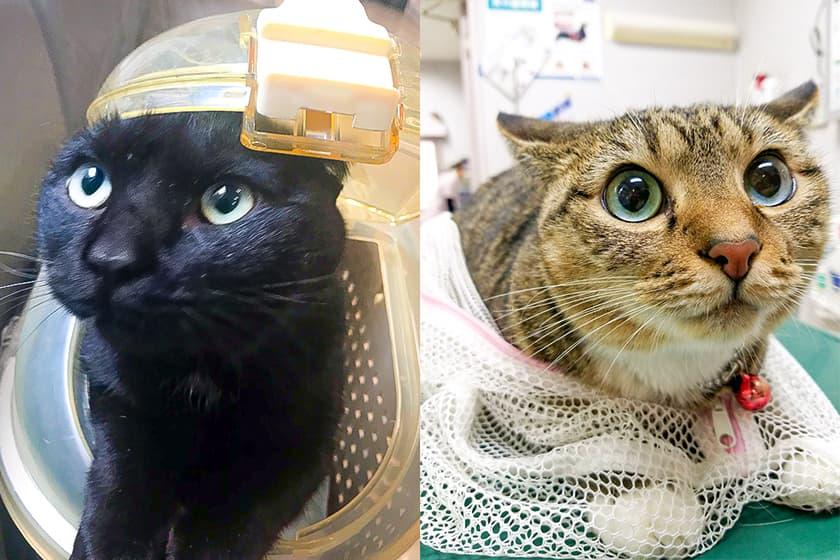 ケージに入った黒猫と洗濯ネットに入った猫