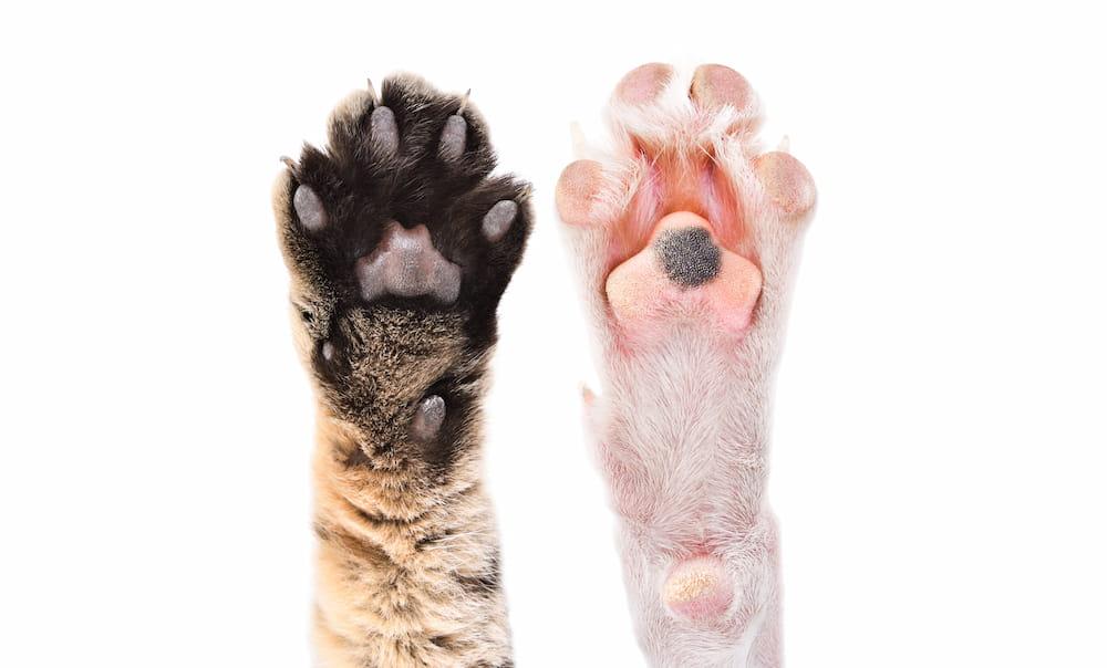 白い背景に猫と犬の2つの足